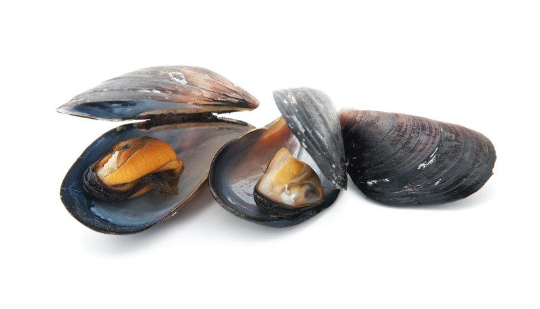 mussels x780