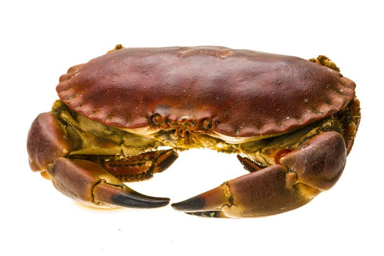 crab2 x 780
