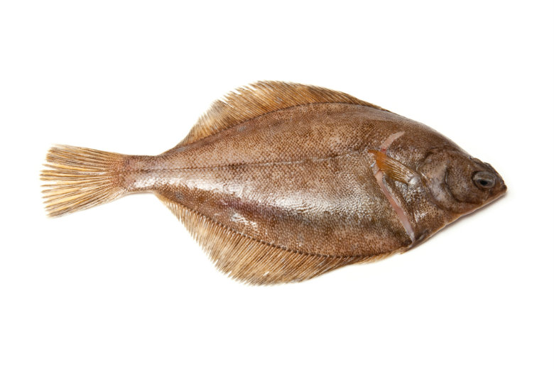 dab-flatfishx780