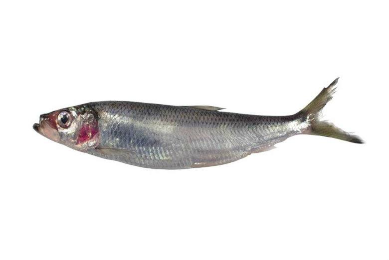 herringx780
