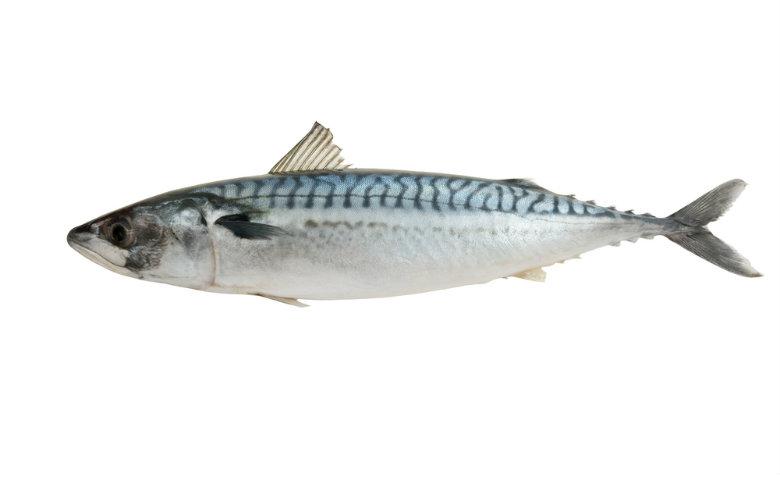mackerelx780