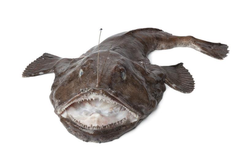 monkfish x 780