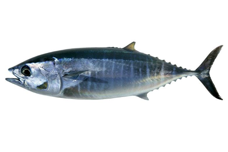 tuna x 780