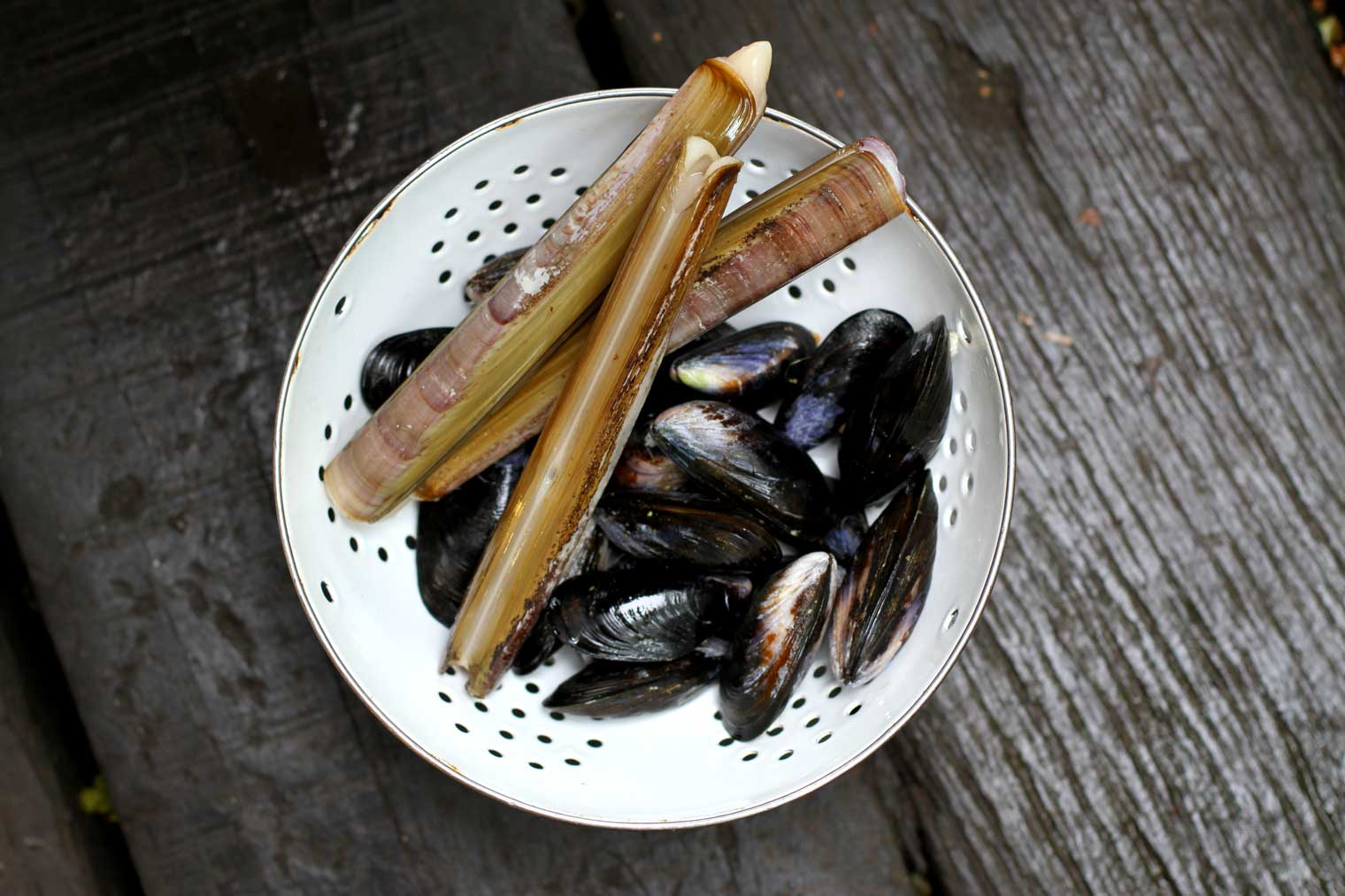 Mussels-and-razor-clams_1520