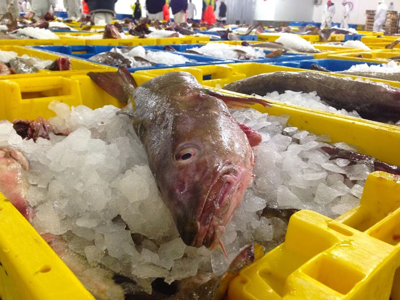 Just like always fish on friday for Franks fish market