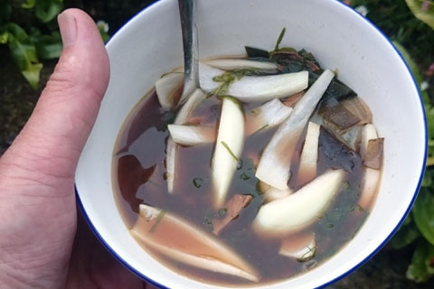 soup480