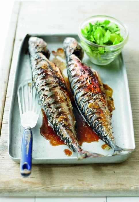 mackerel - SS@B