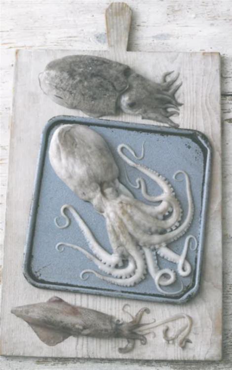 braised octopus in rioja