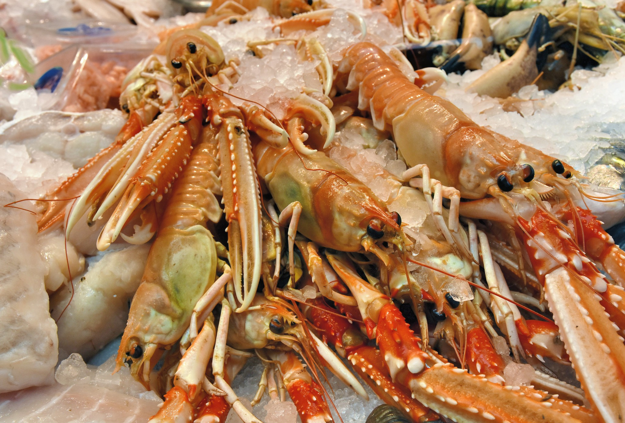 CuanTech turn the waste parts of langoustines into packaging
