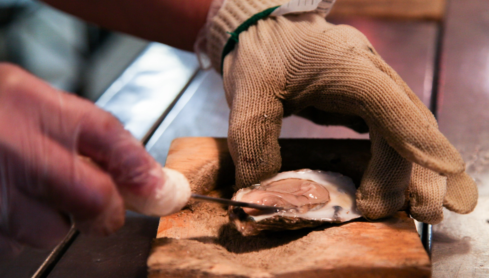 Oysters are shucked at Boatyard Bar and Grill, a restaurant in Annapolis, Md., on Jan. 24, 2013. The restaurant saves its shucked oysters shells for the Shell Recycling Alliance, which has generated 1,000 tons of shell that are sent to an oyster hatchery to be cured, power-washed and used as host material for oyster larvae. (Photo by Steve Droter/Chesapeake Bay Program)